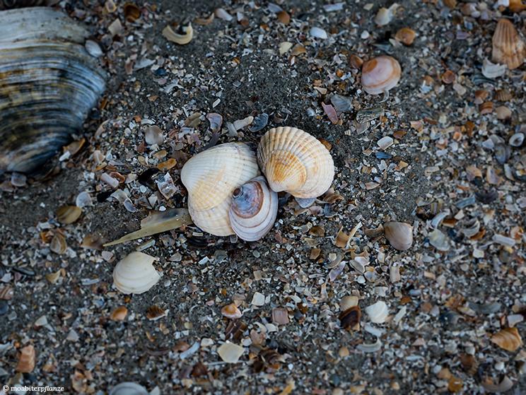 Muscheln, Sand, Strand, Meer